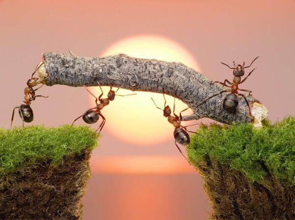 Donde viven las hormigas que comen como nacen - Casa de hormigas ...