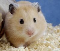 Donde Viven Los Hamsters?
