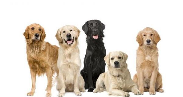 Donde viven los perros que comen como nacen - Donde viven los acaros ...