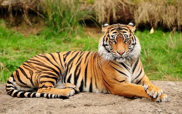 Donde viven los tigres que comen como nacen - Donde viven los acaros ...