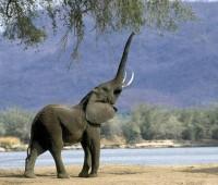 Donde Viven Los Elefantes?
