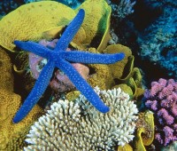 Donde Viven Las Estrellas De Mar?