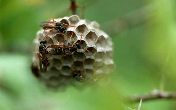 Donde viven los insectos que comen como nacen - Donde viven los acaros ...