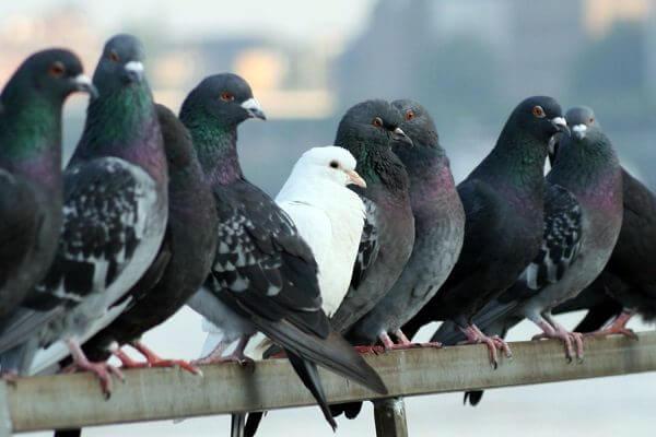 donde-viven-las-palomas2
