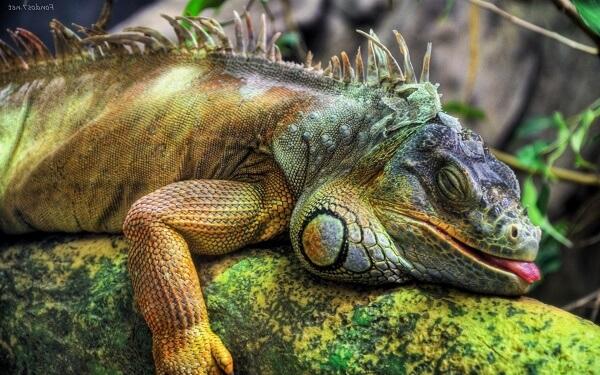 Donde Viven Las Iguanas