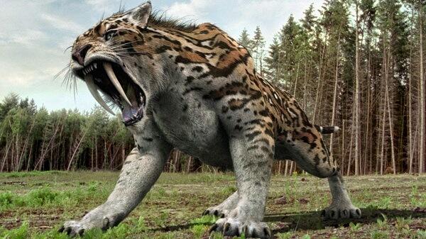 Donde Vive El Tigre Dientes De Sable