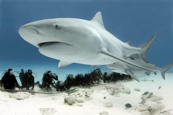 Donde Viven Los Tiburones2