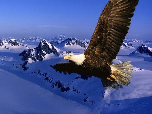 Donde Viven Las Aguilas