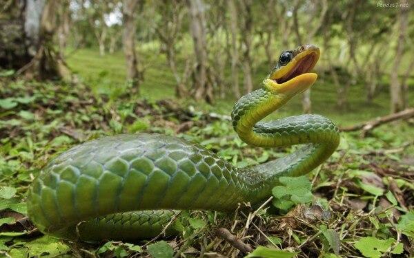 Donde Viven Las Serpientes