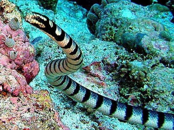 Donde Viven Las Serpientes2