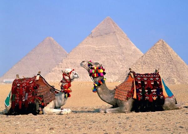 Donde Viven Los Camellos2