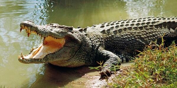 donde viven los cocodrilos
