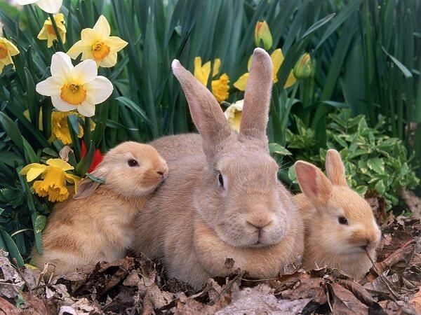 Donde Viven Los Conejos2