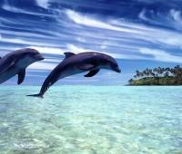 Donde Viven Los Delfines?