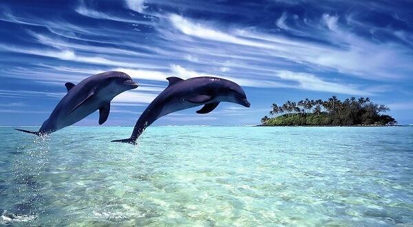 Donde Viven Los Delfines