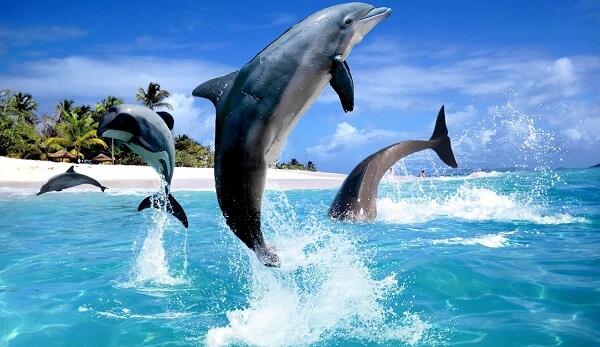 Donde Viven Los Delfines2