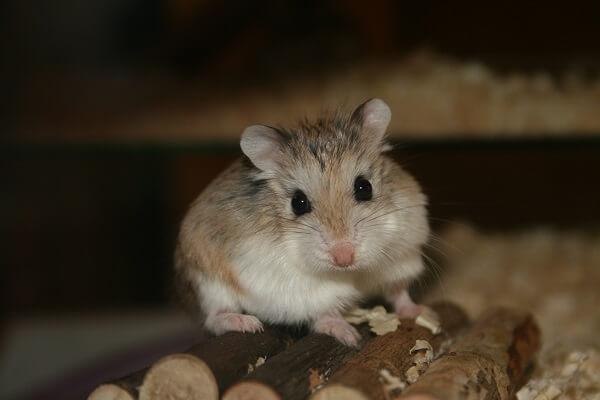 Donde Viven Los Hamsters