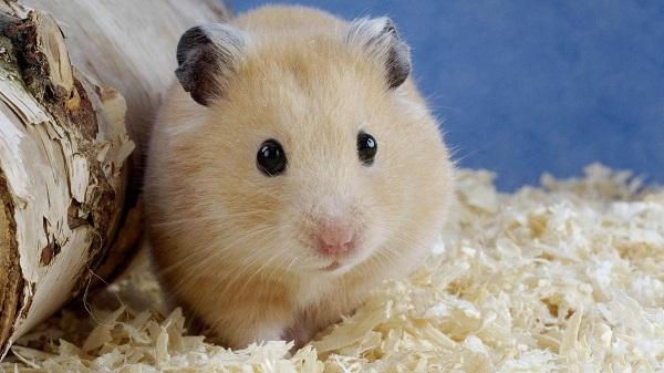 Donde Viven Los Hamsters2