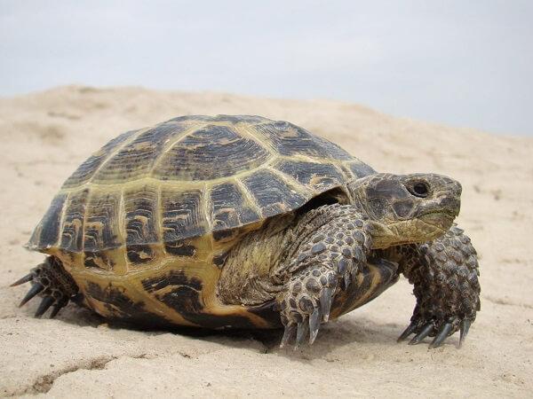 Donde Viven Las Tortugas