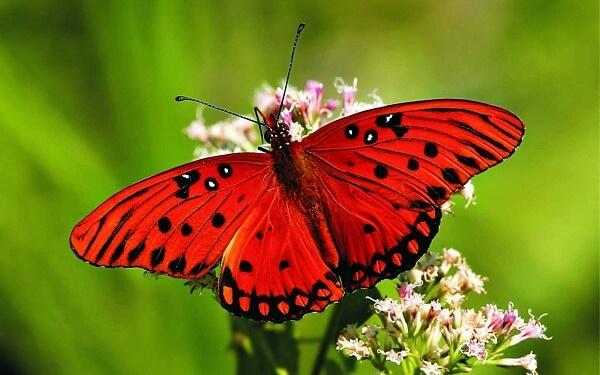 Donde Viven Las Mariposas