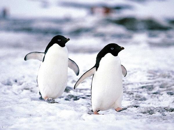 Donde Viven Los Pingüinos