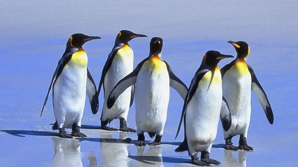 Donde Viven Los Pingüinos2