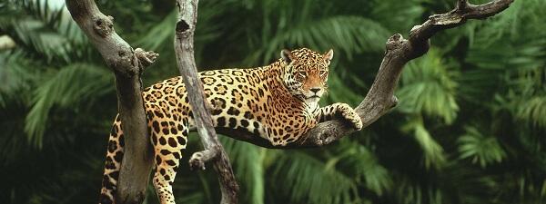 Donde Vive El Jaguar