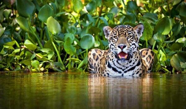 Donde Vive El Jaguar2