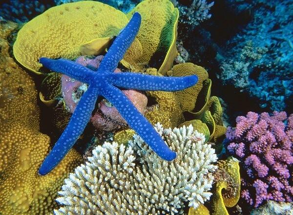 Donde Viven Las Estrellas De Mar Que Comen Como Nacen