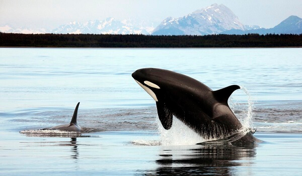 Donde Viven Las Orcas