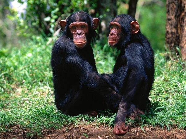 Donde Viven Los Monos