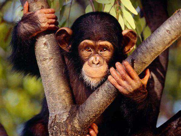 Donde Viven Los Monos2
