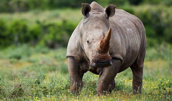 Donde Viven Los Rinocerontes