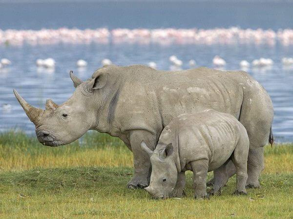 Donde Viven Los Rinocerontes2