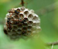 Donde viven los insectos?