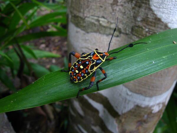 donde-viven-los-insectos2