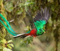 Donde Vive El Quetzal?