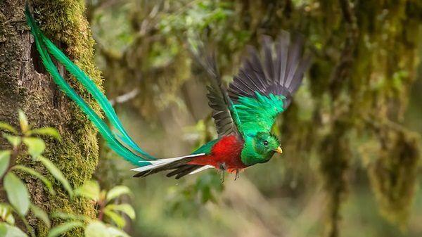 donde-vive-el-quetzal