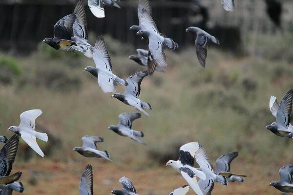 donde-viven-las-palomas