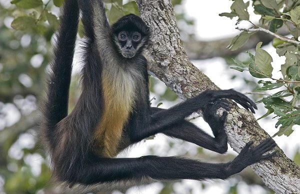 donde-vive-el-mono-arana