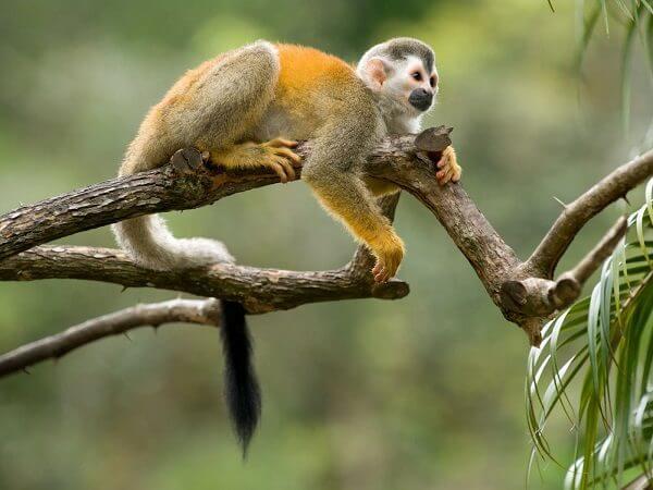 donde-vive-el-mono-arana2