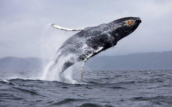 donde-vive-la-ballena-azul2