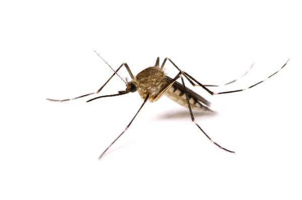 Donde Viven Los Mosquitos