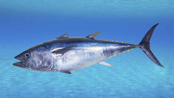 Para que sirve el atun en agua