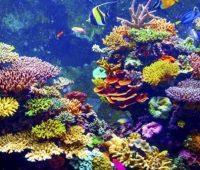 Donde Viven Los Corales?