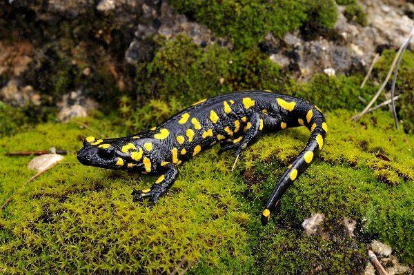 Donde viven los anfibios que comen como nacen - Donde viven los acaros ...