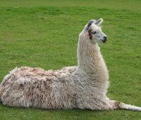 Donde Viven Las Llamas?