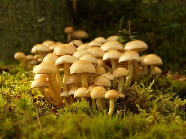 Donde viven los hongos que comen como nacen - Donde viven los acaros ...