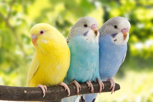 Donde viven los periquitos que comen como nacen - Donde viven los acaros ...