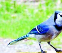 Donde Viven las Aves?